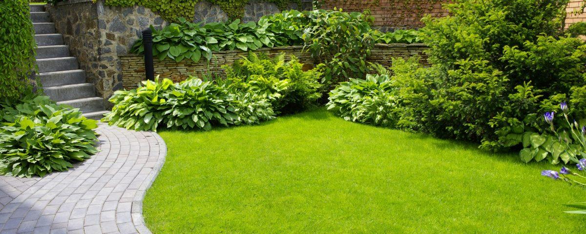 bruno jardins jardinage