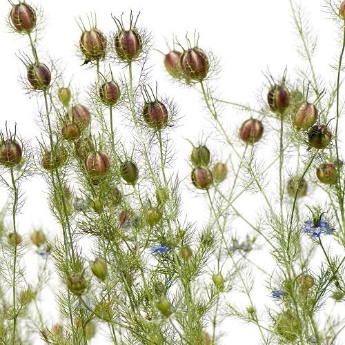 plante végetal stabilisé